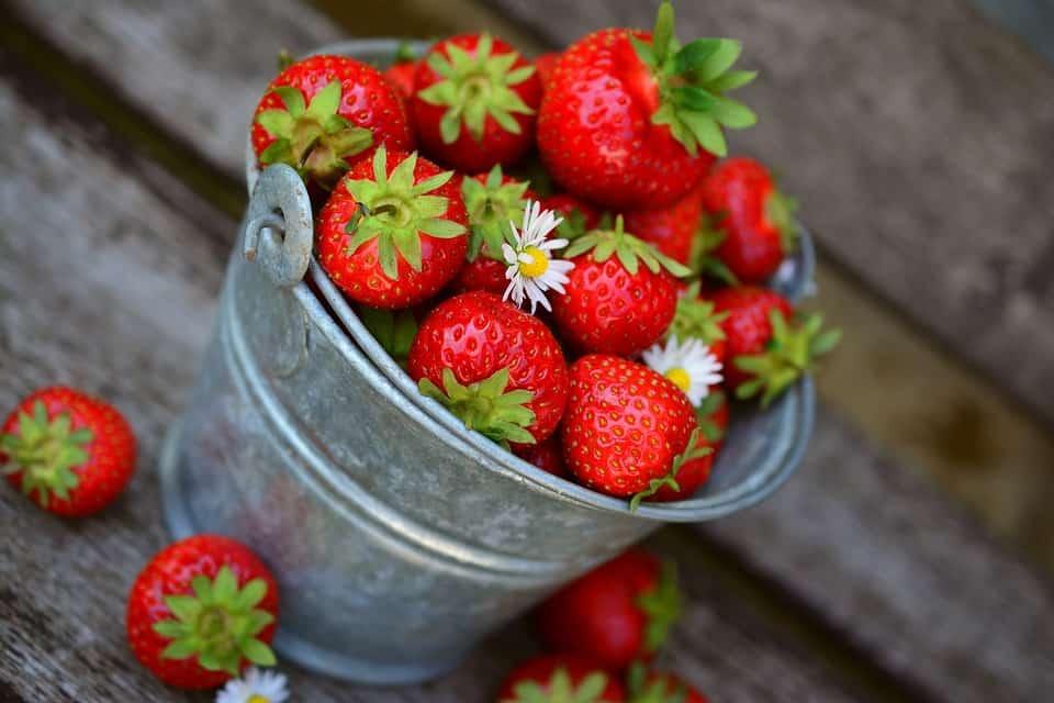 coulis-fraise-centrifugeuse